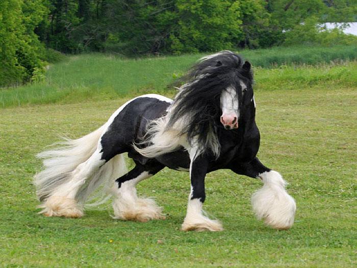 عکسهایی از اسب های بسیار زیبا