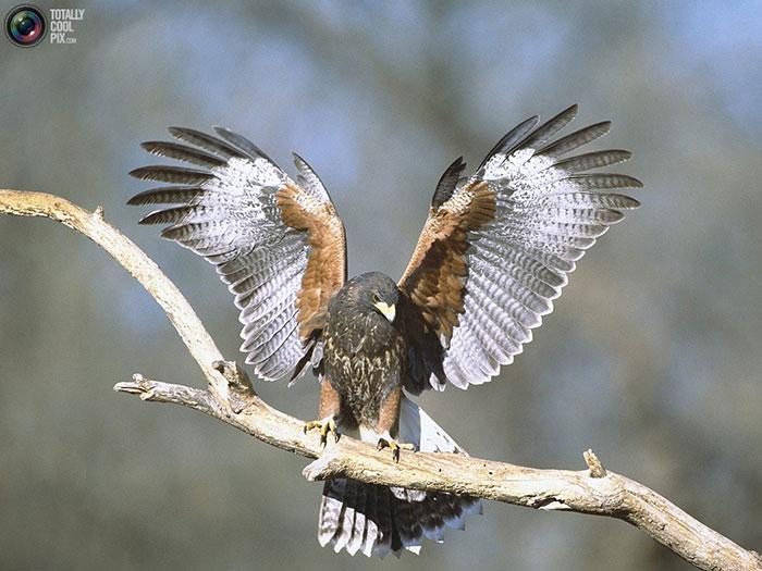 دانلود عکس حیوانات زیبا با کیفیت بالا