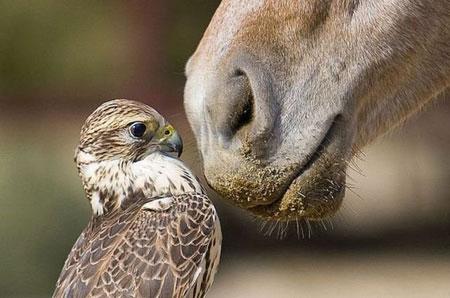عکس های بامزه و خنده دار از حیوانات (2)