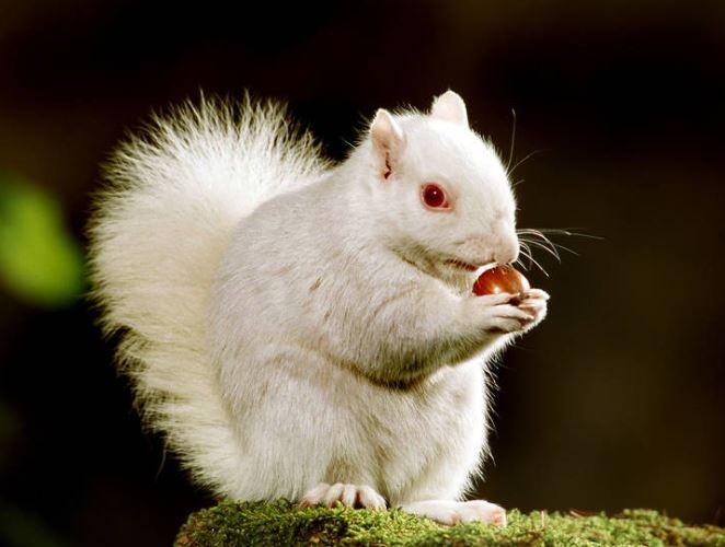 عکس/ حیوانات سفید پوست