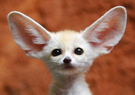 عکس های زیبا و بامزه از دنیای حیوانات