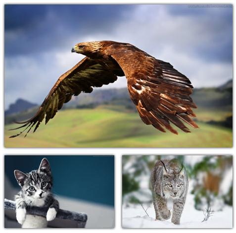 مجموعه والپیپر های HD با موضوع حیوانات - Animals HD Wallpapers