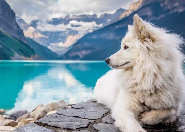 حقایق جالب و شگفت انگیز و دانستنی گرگ ها