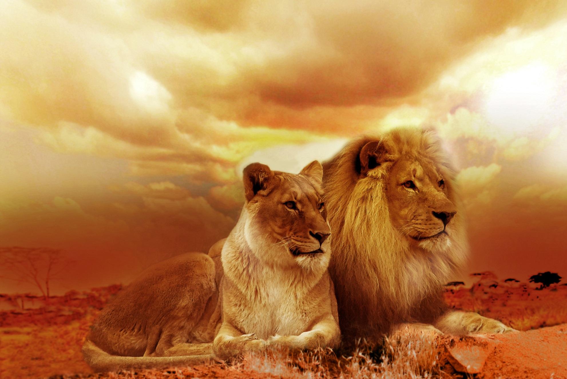 عکس حیوانات برای پروفایل ؛ عکس پروفایل حیوانات زیبا در طبیعت