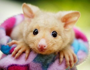 بامزه ترین حیوانات دنیا + تصویر